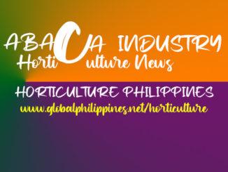 Horticulture Philippines Abaca