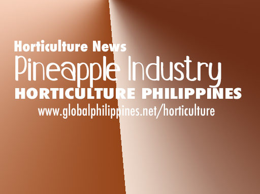 Horticulture Philippines Pineapple