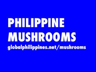 Philippine Mushrooms